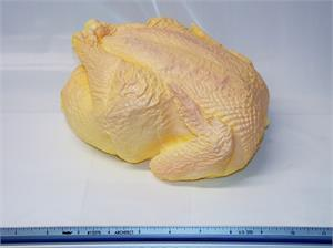 Replica chicken for display, fake chicken, Whole uncooked chickens for fake food display.