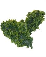 plastic kale for salad bar display On Sale.